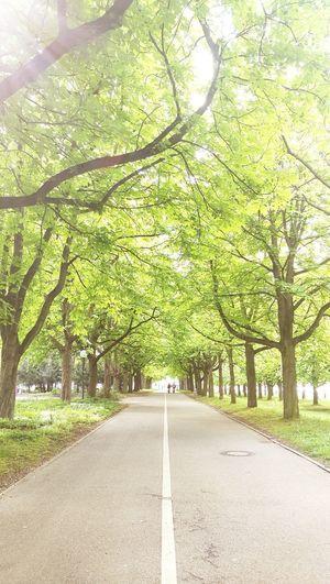 Ludwigsburg Bärenwiese Nature Tree The Way Forward Outdoors Trees Way