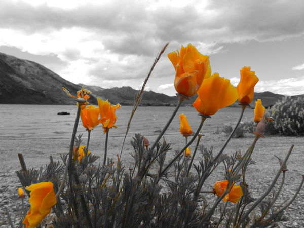 Southern Island of New Zealand Black And Orange Flowers Nature No People Orange Color Outdoors