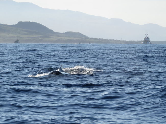 early morning whale watching, Maui, Hawaii, 03.2014 Beauty In Nature Blue Day Humpback Whale Idyllic Lahaina Bay Mountain Mountain Range Nature No People Non-urban Scene Ocean Outdoors Remote Rippled Scenics Sea Seascape Sky Tranquil Scene Tranquility Water Waterfront Wave Whale Watching