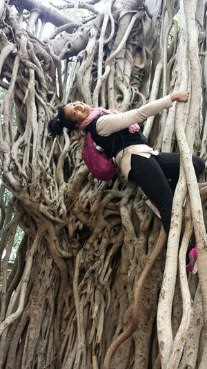 I climb a tree today because some one planted it long long ago and protected it from the axe. Plant trees so you can grow life and leave life for future generations when you are gone. This big banyan tree in Beirut was a pleaant surprise during my weekend city hike. protected within American University campus. It appears to be growing there from two centuries at least. To find a tree revered in India all the way away from it was a bonus for me and also intriging to think how did it get there.? #banyanTree #lingevity #ageless #thriving #nestled #preciouslufe #greenlife #cityscape #cityhike #Summer Sports #walking #campurlife #climbing #hanging Out #funtime #galsdayout #solotraveler #backpacker #Weekend #upwards #girl #woman #she #connection #Nature  Tree Strength