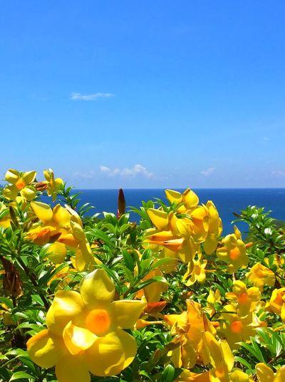 Flower Horizon