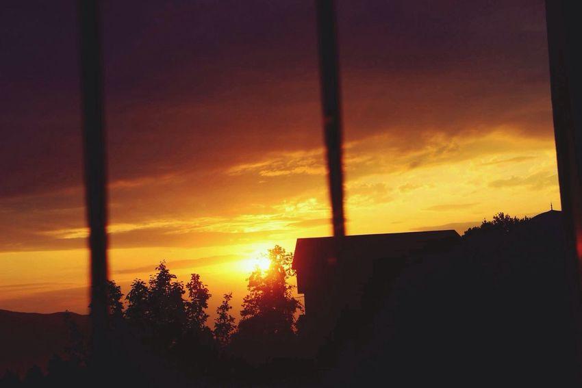 Sunset Tree Myhome Giresun