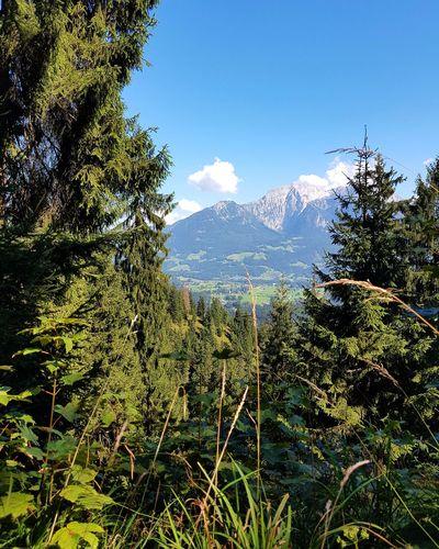 Alps Germany Landscape_lovers Bavarian Nature Mountain Naturelandscape Landscapenature Summer Nature Photography Nature Photography Forrest Walk Sun Momentsinnature