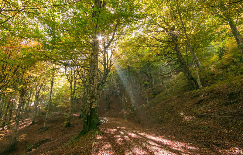 Pathway in the autumn forest with sunlight Autumn Footpath Nature Trekking Wonderful Wood Beauty In Nature Beech Environment Foliage Forest Italy Landscape Monte Cucco Non-urban Scene Park Pathway Rays Road Scenics Scenics - Nature Sun Travel Destinations Umbria Way