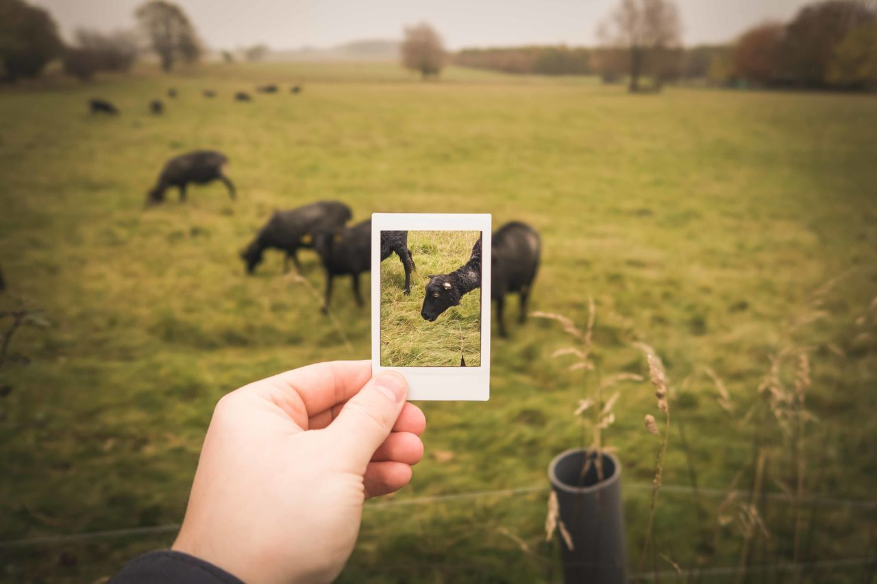 Cropped Image Of Hand Holding Instant Print Transfer Photo On Field