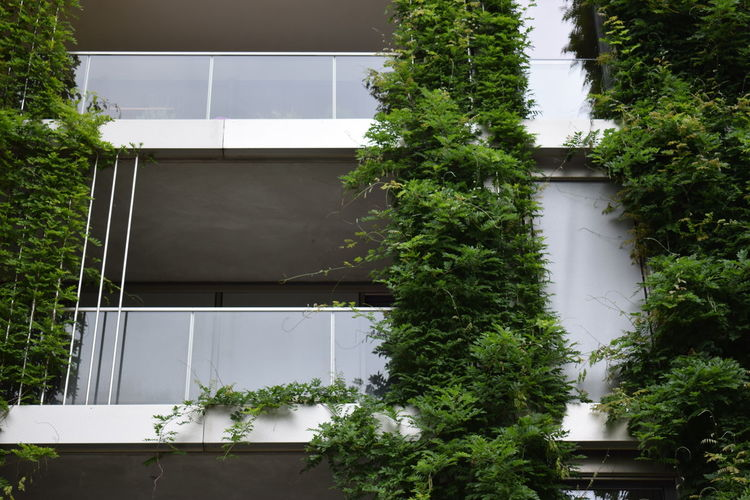 Low Angle View Of Plants On Building