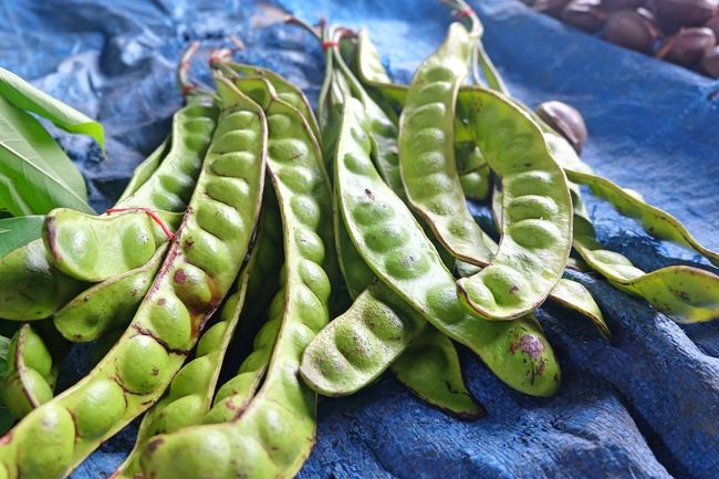 Parkia Speciosa Sting Bean Close-up Day Focus On Foreground Food Food And Drink Freshness Green Color Growth Healthy Eating High Angle View Leaf Nature No People Outdoors Petai Petai Bean Petai Fresh Pete  Plant Plant Part Succulent Plant Vegetable Wellbeing