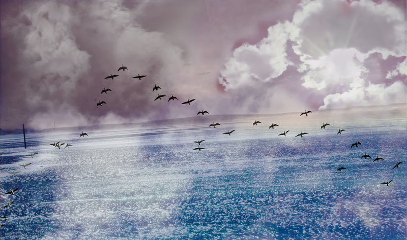 Collage Water Reflections Birds Clouds Composite Digital Art Flock Of Birds Flying Horizon Over Water Mid-air Migrating Sea Sky