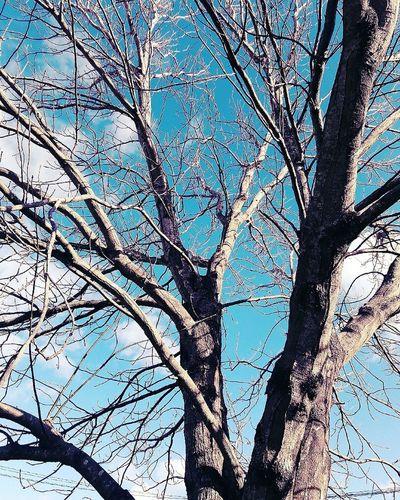Aunque las hojas caigan, el árbol sigue de pie. Relaxing Beautiful Nature Beautiful Nature Photography Montevideo Happiness Naturelovers Beautiful City Uruguay Hello World Enjoying Life Hi! Nature Taking Photos Clouds And Sky Clouds Lovers Sun Otoño 🍁 Autumn Autumn Colors Autumn🍁🍁🍁 Tree Love