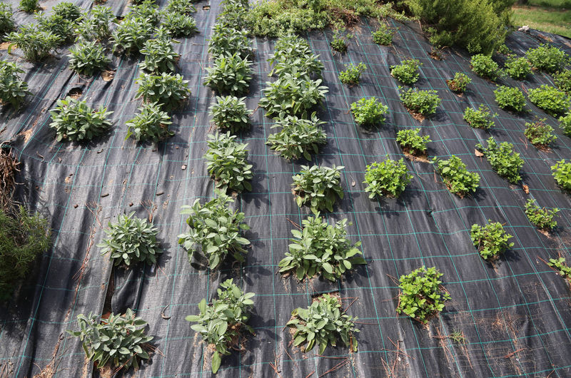 High angle view of fresh green plants