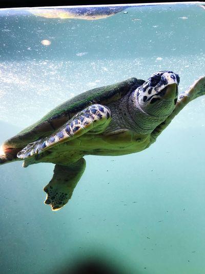 Reptile Turtle