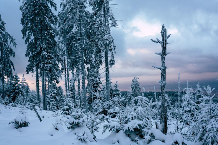 Beauty In Nature Cloud - Sky Cold Temperature Day Landscape Nature No People Outdoors Sky Snow Tree Winter