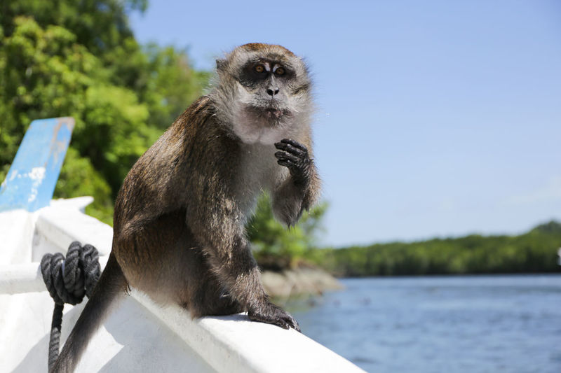 Monkey Animal Animal Themes Day Hungry Looking Monkey Nature One Animal Standing Wildlife