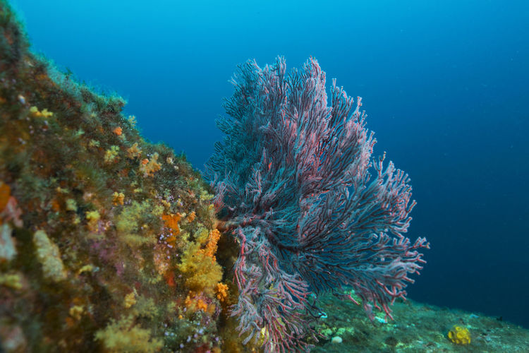 A marine life and coral formation at Tenggol Island SCUBA Anemone Fish Animal Themes Coral Day Fish Marine Nature Outdoor Photography Reef Sea Life Soft Coral Turtle UnderSea Underwater underwater photography