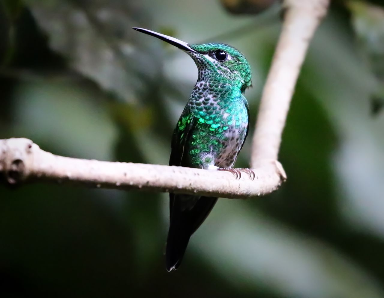 Close-Up Of Hummingbird Perching On Twig