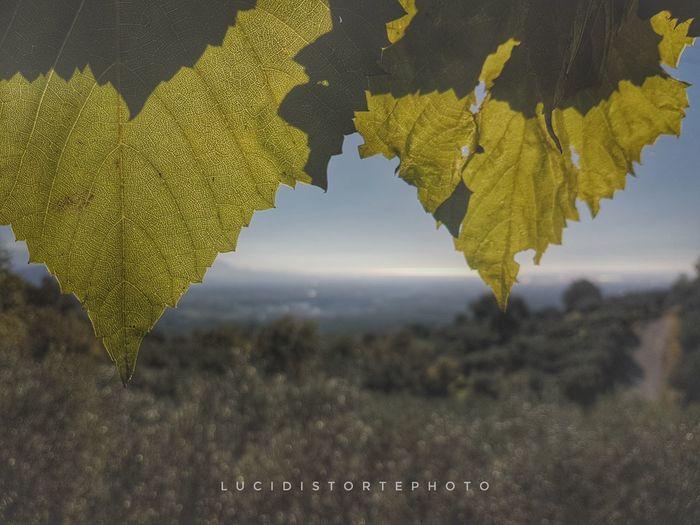 Landscape Nature Lucidistortephoto Samsung Galaxy S7 Day Eboli Sky Tree