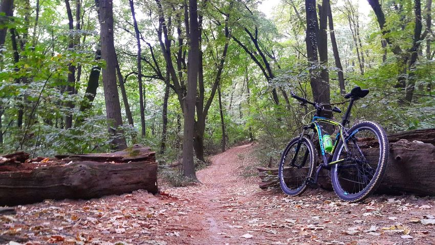 Nature Tree Forest Grass Nikon Belgrade Wildness Cycling Becycle Offroad Naturebeauty Forest Photography Trees Alone