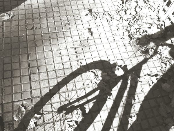 Sombras de otoño (autumn shadow) Creative Light And Shadow Foto Blackandwhite Photography Urban Lifestyle EyeEm EyeEm Best Shots Eye4photography  Streetphotography Fall Beauty