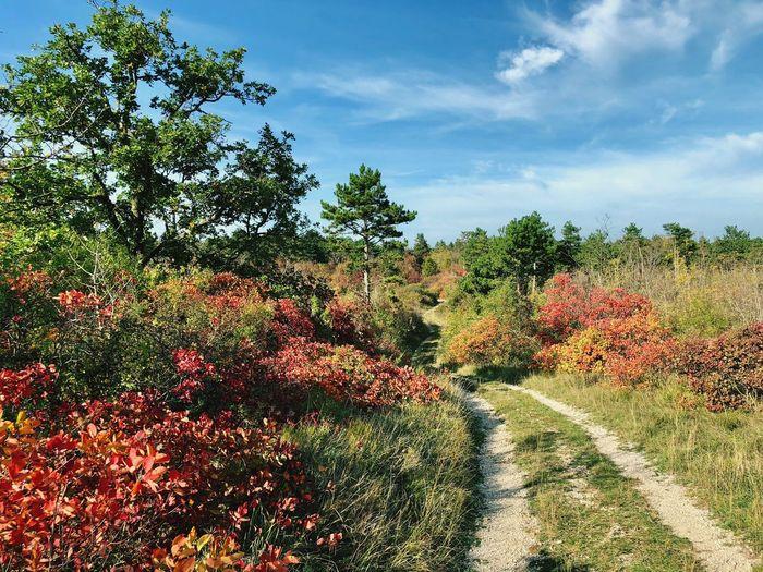 Carso in autumn
