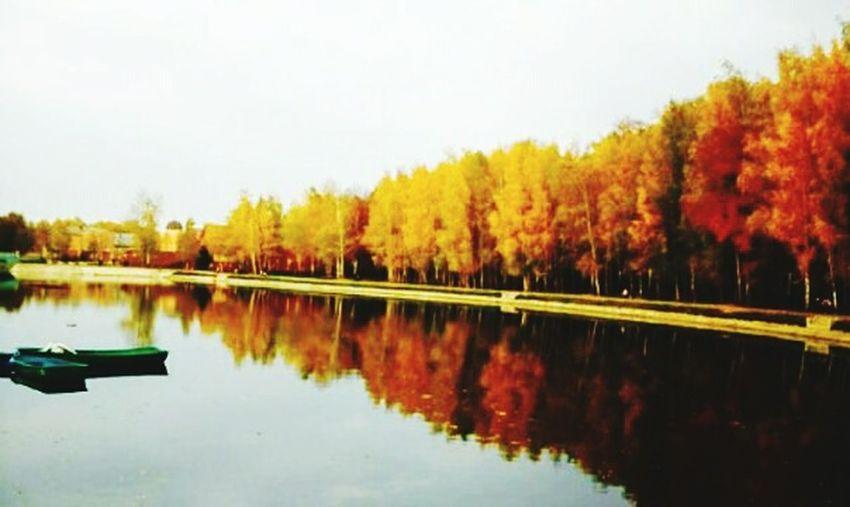 облака👍 небеса красота красотище крамивоеместо красиво небо⛅️ лес и природа Лес Осень 🍁🍂 осень прекрасна 🌾🍂🍃
