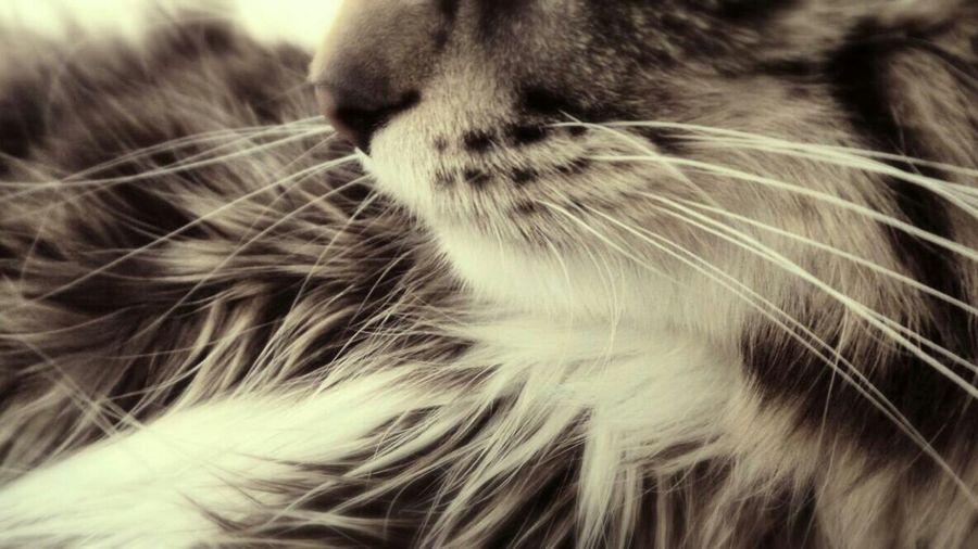 ♡ I adore this Chase Cats Closeup Follow4follow Mak3billions4u Photo Taking Photos Animals First Eyeem Photo Photogenic Cats