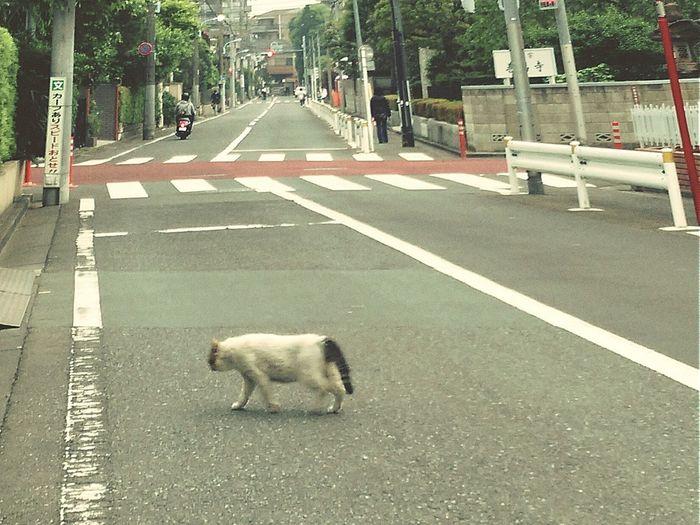 Hello World Cute Animals Road Scenery Cat Lovers