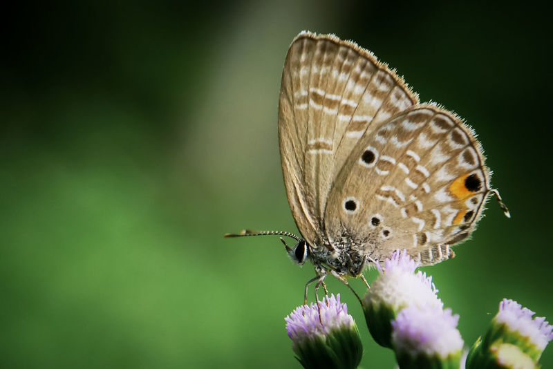 Butterfly Insect Butterfly - Insect Animals In The Wild Animal Wildlife Flower One Animal Focus On Foreground Animal Themes Beauty In Nature Nature