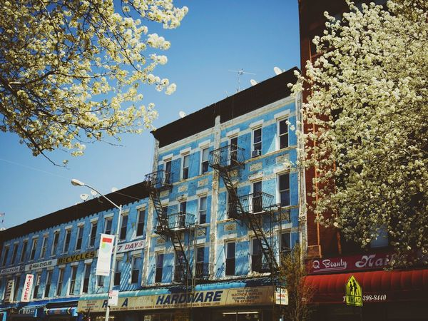 New York Streetphotography Brooklyn Spring Park Slope Building Sky Blue Cherry Blossoms
