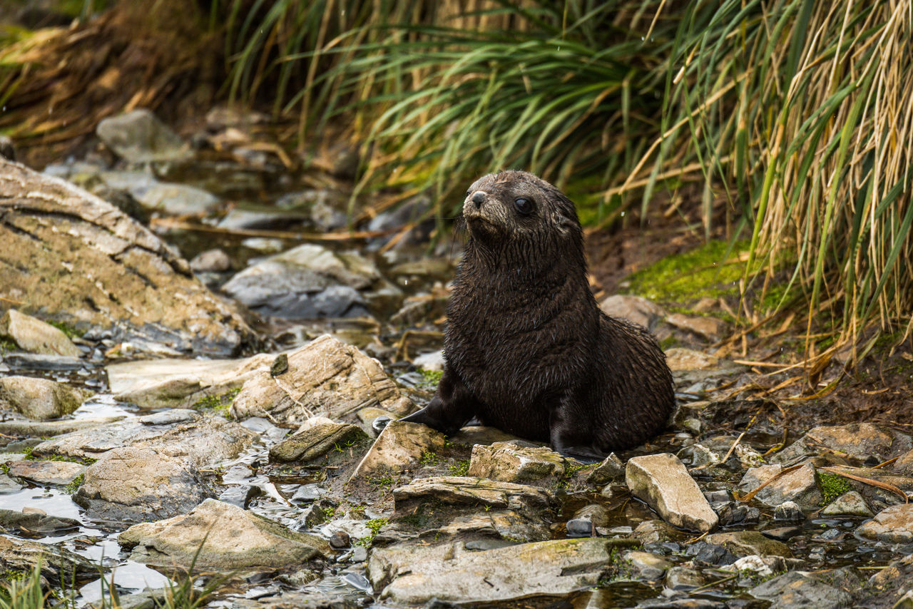 animal wildlife, animals in the wild, one animal, rock - object, otter, no people, outdoors, nature, mammal, animal themes, day, sitting, full length, close-up