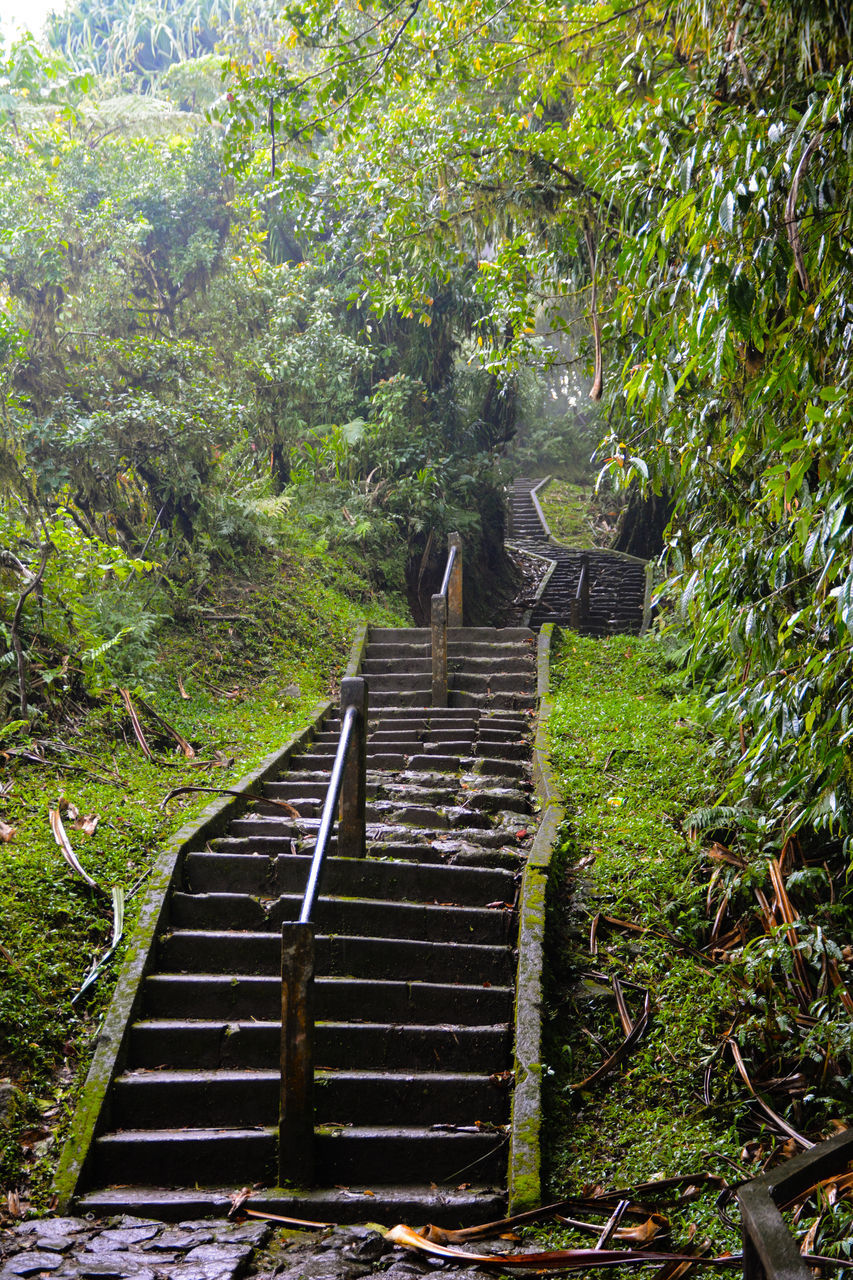 Staircase On Steps Amidst Trees