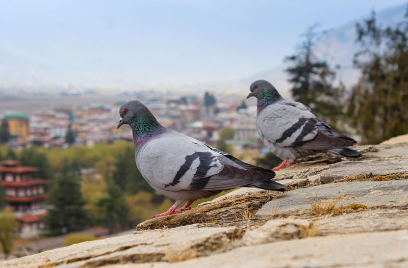 Pigeons perching on retaining wall