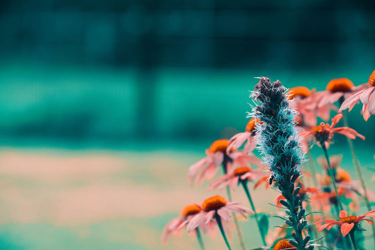 Rose and purple colored meadow flowers in front of green bokeh Growth Plant Flower Flowering Plant Vulnerability  Freshness Close-up Beauty In Nature Fragility Selective Focus Focus On Foreground Day No People Nature Orange Color Petal Flower Head Outdoors Green Color Inflorescence