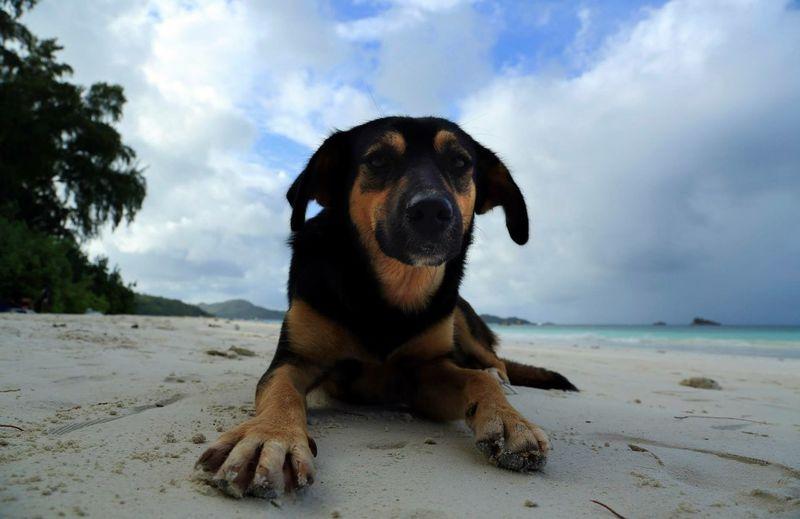 Trip toSeychelles Seychelles indianocean Dog