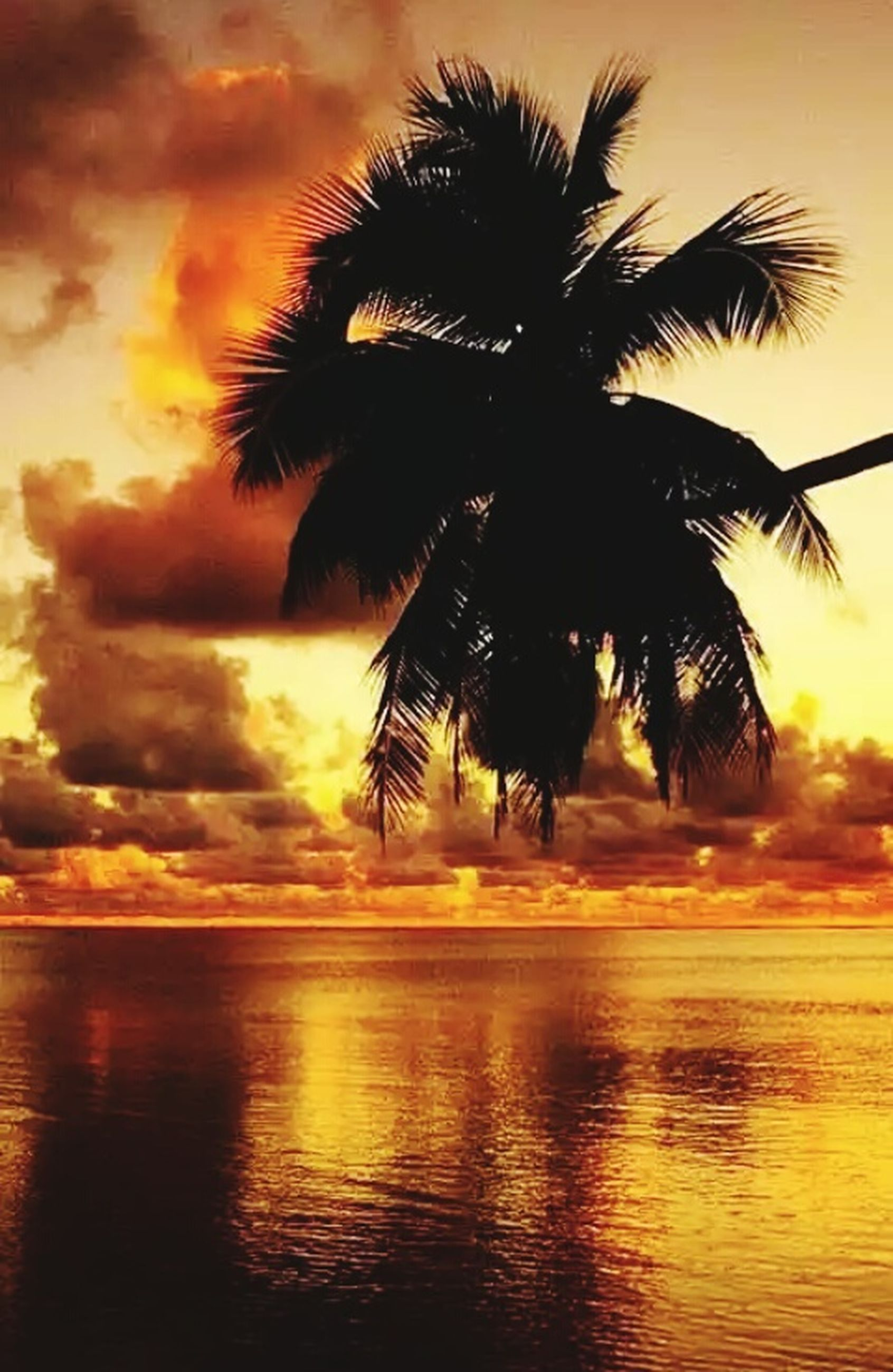 palm tree, sunset, tree, scenics, beauty in nature, silhouette, water, sky, orange color, sea, nature, tranquil scene, tranquility, reflection, no people, outdoors, beach, waterfront, cloud - sky, tree trunk, growth, vacations, horizon over water, day