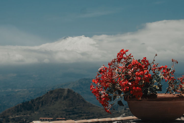 Close-up of red flowering plant against mountain