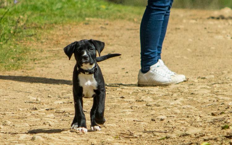 Puppy Love Puppy❤ Puppydog Puppy Puppy Lovin Puppylove 😘😍🐶