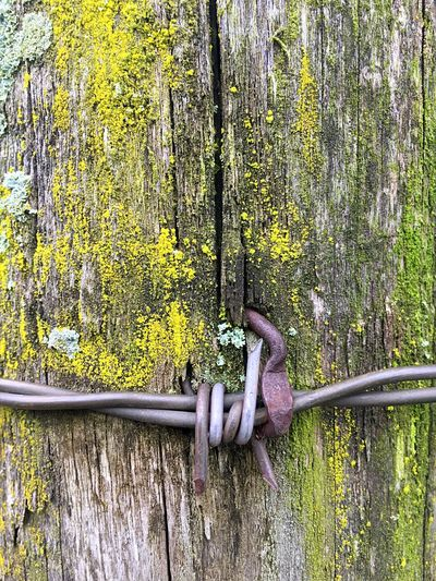 Barbwire Barbed Wire Outdoors Close-up Moss Green Wood - Material Fence Post Wood Metal Wire