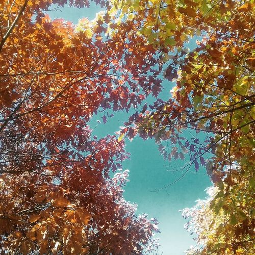 Low Angle View Nature Day Tree Beauty In Nature Outdoors Backgrounds Sky No People