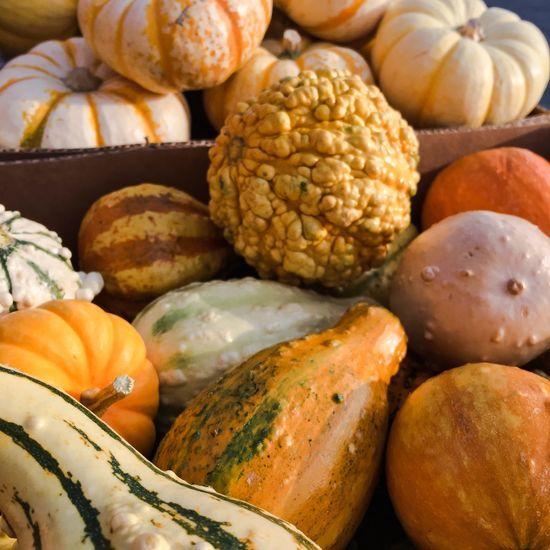 EyeEm Selects Gourds Kalebasse Herbstfarben Höst Pumpa Autumn Colors Pumpkins Vegetable Outdoors