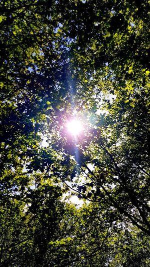 soleil, forêt,