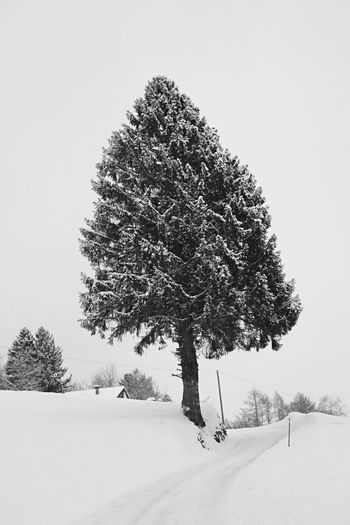 Snow Winter Cold Temperature Tree Weather Nature Beauty In Nature Outdoors Scenics No People Day Landscape