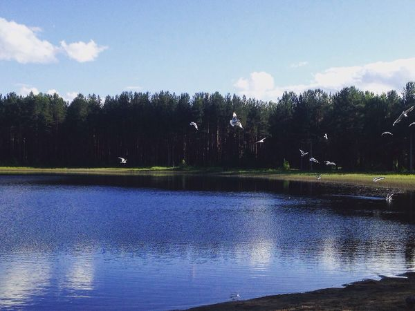 Sky Water Nature Forest Birds Amazing First Eyeem Photo Summer Lifestyles Day
