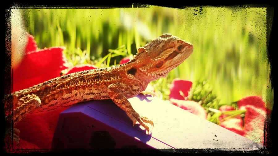 Tetzuo I Love My Pet