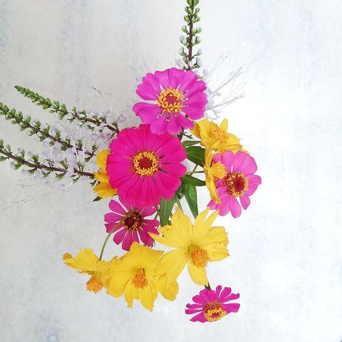 Flower Flower Head Purple Blossom Petal Nature Beauty In Nature