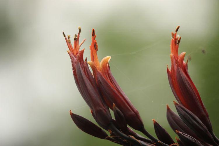 Flower 花 虹の郷 Japan Flowers,Plants & Garden Photography Nature