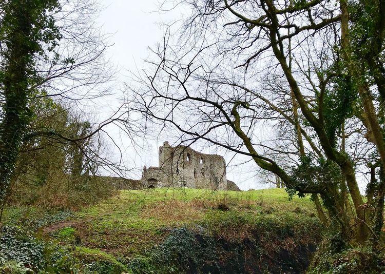Castle Plant