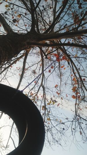 fall tire swing Fall Low Angle View Tireswing Trees Nature