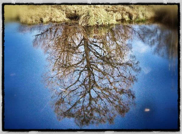 Reflection Upside Down TreePorn