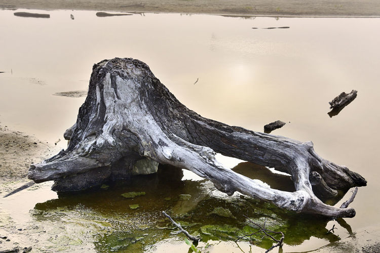 Giving Tree Old Tree Oregon Reflection Tranquility Tree Trunk Aged Aged Beauty Aged Wood Beach Beauty In Nature, Driftwood Light And Shadow Moss Old Oregon Coast Sand Shore Tranquil Scene Water