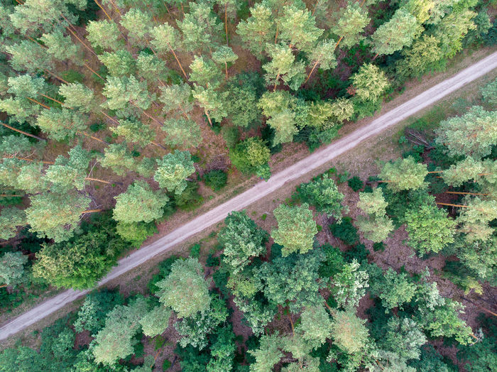 Direction Directly Above Drone Photography Aerial View Forest Growth The Way Forward Diminishing Perspective Green Color Dirt Road Diagonal Natural Pattern Diagonal Lines Road Scenics - Nature Day Plant Tree No People Transportation Nature Beauty In Nature Land Tranquility Outdoors Non-urban Scene Tranquil Scene Landscape Rail Transportation Track My Best Photo